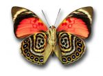 Simply Stripes Butterfly Red